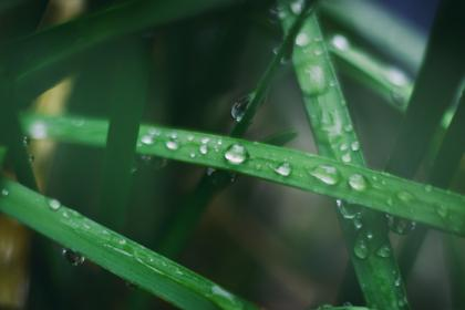 green, leaf, plant, outdoor, water, drop, raindrops, blur