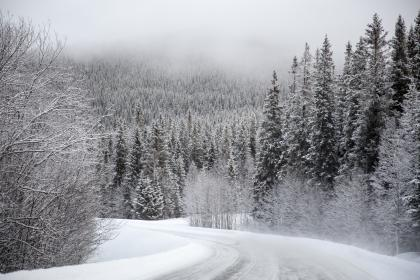 snow, white, winter, trees, plant, nature, forest, landscape, road