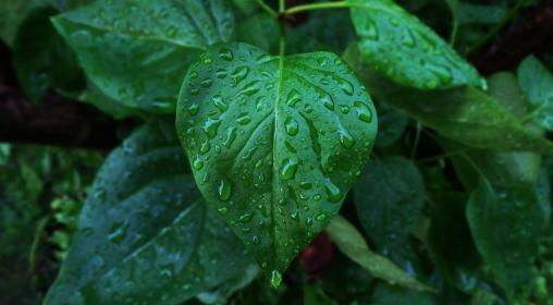 green, leaves, plant, wet, raindrops, outdoor, garden