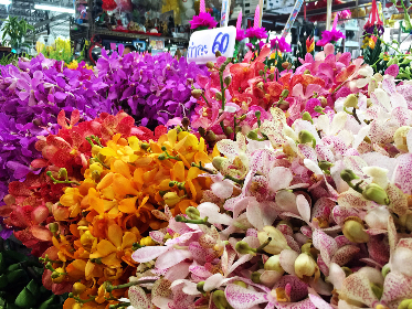 Orchid, market, flowers, colourful, colorful, flower market