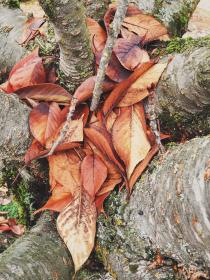 free photo of tree trunks  leaves