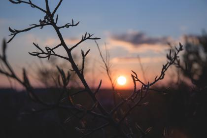 nature, trees, branches, twigs, sky, horizon, clouds, silhouette, shadows, light, sun, dusk, dawn, still, bokeh