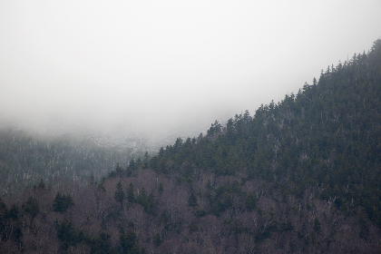 fog,   mountain,   trees,   climate,   weather,   nature,   outdoors,   forest,   mist,   landscape,  mountainside,  slope,  valley
