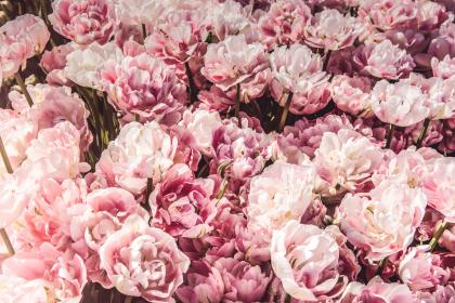 pink, flowers, bunch, bouquet, gift, commercial