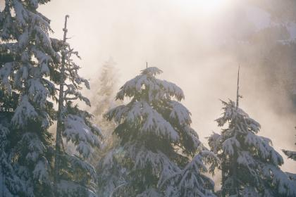 fog, winter, snow, cold, trees, outdoors