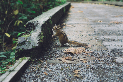 Squirrel,   nature,   seeds,   green,   canada,   British Columbia,   food, road, pavement, animal, wildlife, outdoors