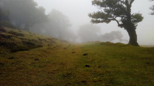 nature, landscape, trees, fog, grassland, grass, green, chill, relax