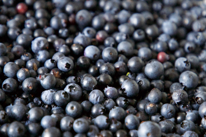 blueberries,  background,  food,  berry,  fresh,  blue,  fruit,  organic,  healthy,  eating,  close up