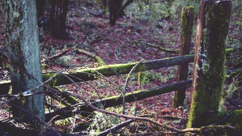 moss, forest, woods, trees, leaves, nature, sticks