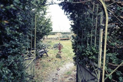 backyard, garden, vines, trees, plants, gate, grass