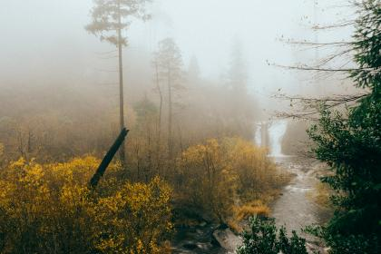 waterfall, river, stream, nature, woods, trees, bushes, foggy, mist, wet, outdoors, grey