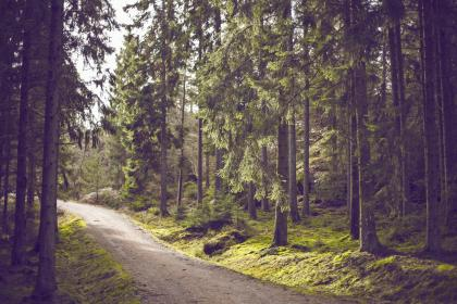 woods, outdoors, trees, trail, path, trek, forest, grass, green, leaves, branches, tree trunks, dirt