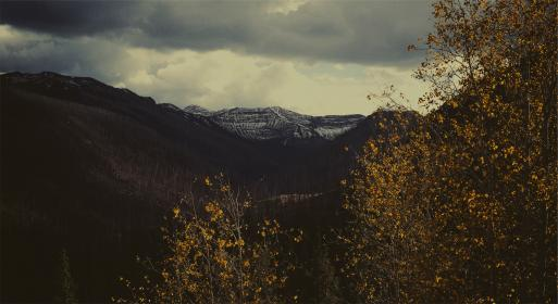 trees, branches, leaves, mountains, dark, cloudy, sky