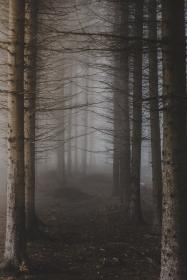 trees, branches, plant,s nature, foggy, forest, outdoor, travel