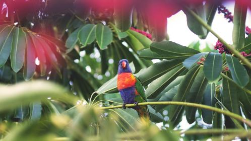 bird, fly, animal, beak, feather, leaves, plant, green, garden, fllower, fruit, colorful, parrot