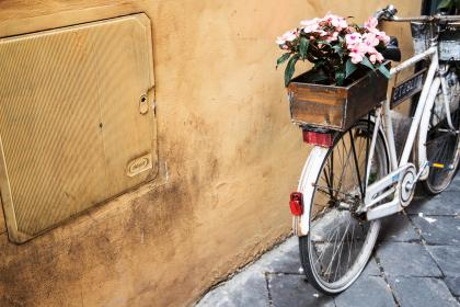 still, items, things, transportation, bicycle, wheels, flowers, pot, box, concrete, floor, wall, lines, patterns, textures