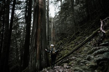 people, girl, woman, climbing, hiking, trek, trees, plant, mountain, landscape, outdoor, adventure, grass, forest, nature