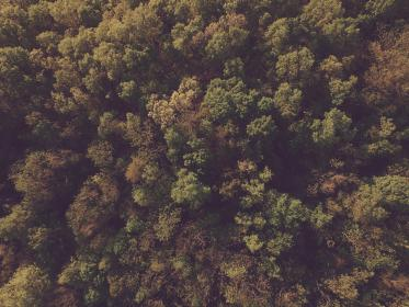 forest, trees, nature, outdoors, fall, autumn, leaves