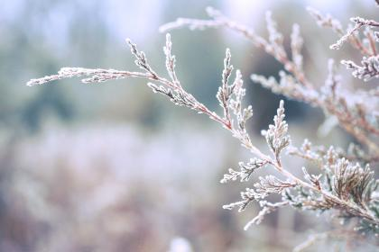 trees, branches, leaves, frost, winter, cold, nature