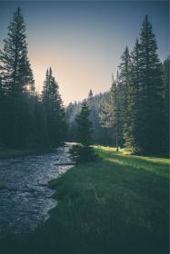 river, stream, water, grass, trees, forest, nature, sunset