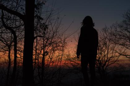 trees, branch, plant, nature, sky, sunset, silhouette, people, man, hill, topview, overlooking
