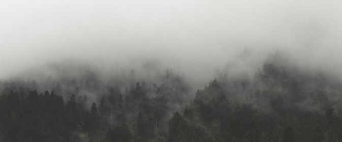 fog,  trees,  landscape,  nature,  forest,  woods,  clouds,  outdoors,  environment,  climate,  travel,  explore,  wanderlust,  mountain,  pine,  mist,  scenery,  evergreen,  green,  moody,  weather,  rural,  backcountry