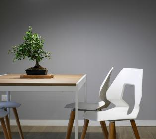 interior, design, table, chairs, furniture, green, plant, wall, indoor, inside, house