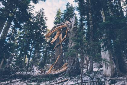 forest, trees, woods, broken tree, branches, nature