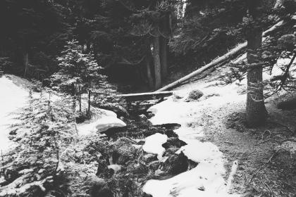 forest, woods, river, stream, water, bridge, wood, trees, logs, black and white, winter, snow