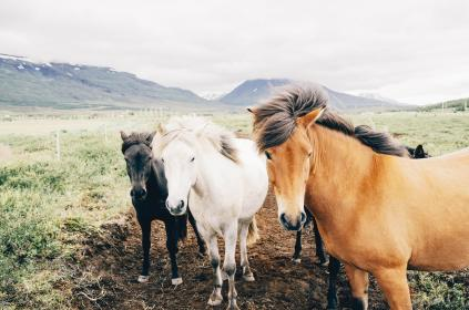 horses, animals, mane, hair, farm, dirt, grass, farm, field, mountains, valeys