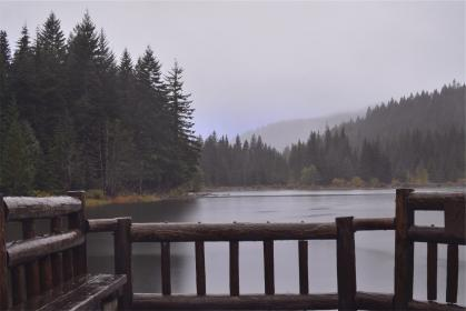 wood, dock, lookout, lake, water, trees, forest, nature