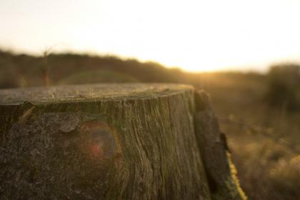 tree, stump, sunrays, sunlight, bark