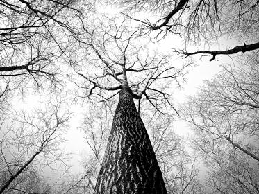 trees, trunk, bark, branches, woods, nature