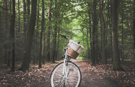 vintage,  bike,  forest,  trail,  hike,  path,  woods,  trees,  bicycle,  transport,  leaves,  green,  travel