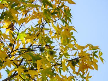 tree, branches, leaves, yellow, green, autumn
