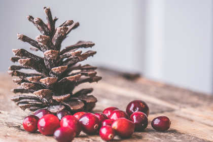 cranberries,   pine cone,   christmas,   decoration,   decor,   rustic,   table,   wood,   wooden,   cc0,   seasonal,   festive