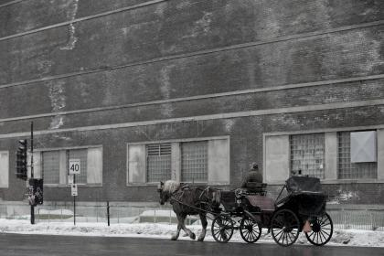 nature, landscape, chariot, people, man, horse, snow, winter ,cold, weather, windows, building, establishment