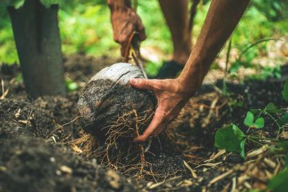 soil, land, environment, nature, coconut, plants, roots, outdoor, people, man