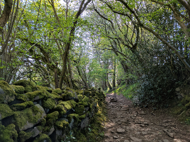 Wales,  wall,  moss,  path, forest, wood, tree, wall