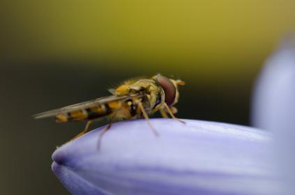 flower, white, petal, bloom, garden, plant, nature, autumn, fall, insect, bee, nectar, macro