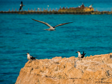 sea, bird, beach, travel, rock, fly