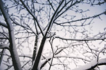 tree, plant, branch, snow, winter, cold