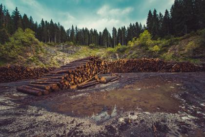 wood, logs, lumber, water, trees, forest, woods, nature, sunshine, grass, dirt