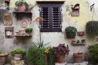 nature, wall, windows, garden, plants, flowerpot, leaves, green, orchids