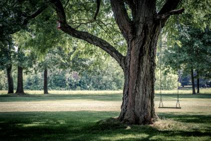 green, grass, lawn, tree, plant, nature, playground, swing, sunny, day, outdoor, shade