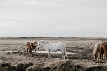 horse, animal, herd, field, farm, outdoor, horizon