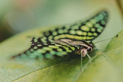 free photo of butterfly  moth