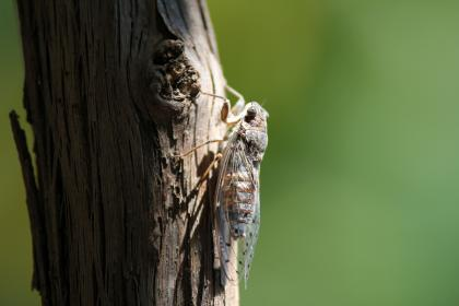 flying insect, animal, outdoor, tree, wood, trunk