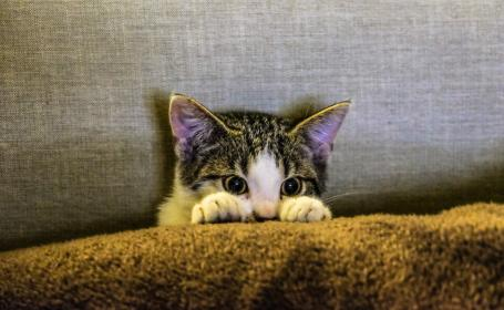 kitten, animal, pet, paws, scaredy cat, couch, sofa