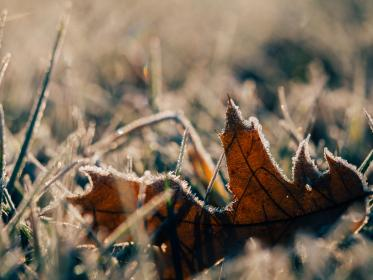 frost, cold, winter, fall, autumn, leaves, grass, ground, nature, sunlight